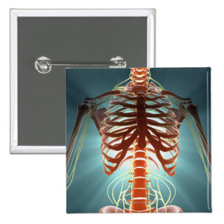 Skeleton and Nerves Button