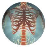 Skeleton and Nerves Dinner Plate