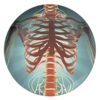 Skeleton and Nerves Dinner Plate