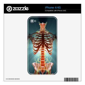 Skeleton and Nerves iPhone 4S Decals