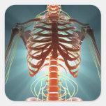 Skeleton and Nerves Square Sticker
