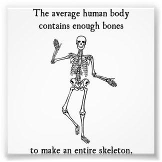 Skeleton Bones in the Average Human Body Photo Print