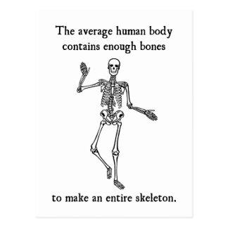 Skeleton Bones in the Average Human Body Postcard