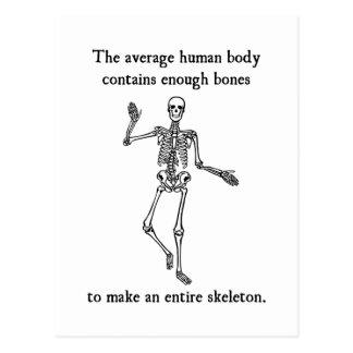Skeleton Bones in the Average Human Body Post Cards