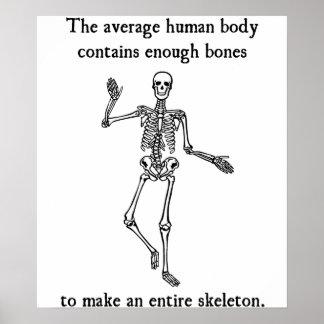 Skeleton Bones in the Average Human Body Poster