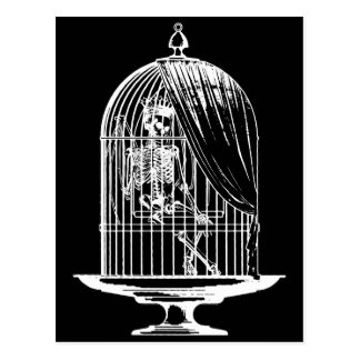 Skeleton in a Birdcage Postcard