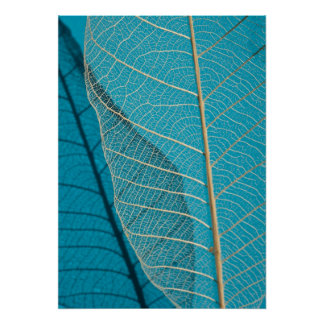 Skeleton Leaf Blue. Abstract Photography Poster
