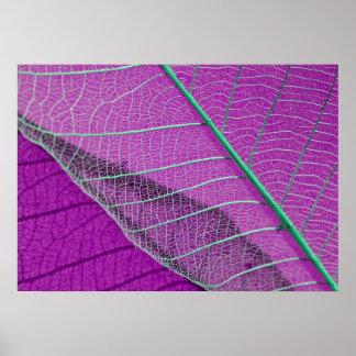 Skeleton Leaf Purple Abstract Poster