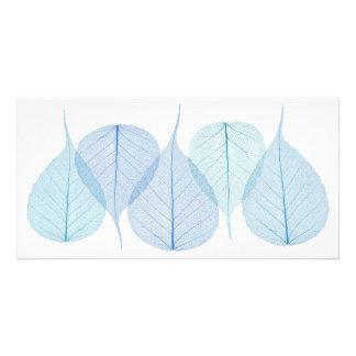 skeleton leaves on white card