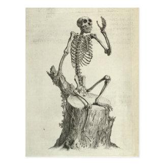 Skeleton Monkey Postcard