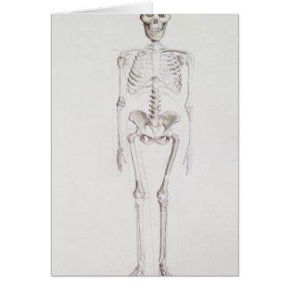 Skeleton of Australopithecus africanus Greeting Card