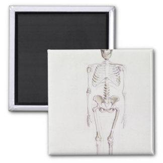 Skeleton of Australopithecus africanus 2 Inch Square Magnet