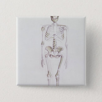 Skeleton of Australopithecus africanus Pinback Button