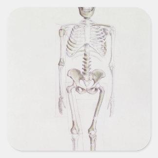 Skeleton of Australopithecus africanus Square Sticker