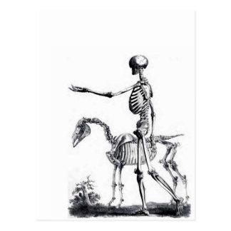 Skeleton skull Halloween Day of the Dead print Postcard