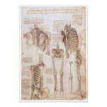 Skeleton Studies, Leonardo Da Vinci, 1510 Poster