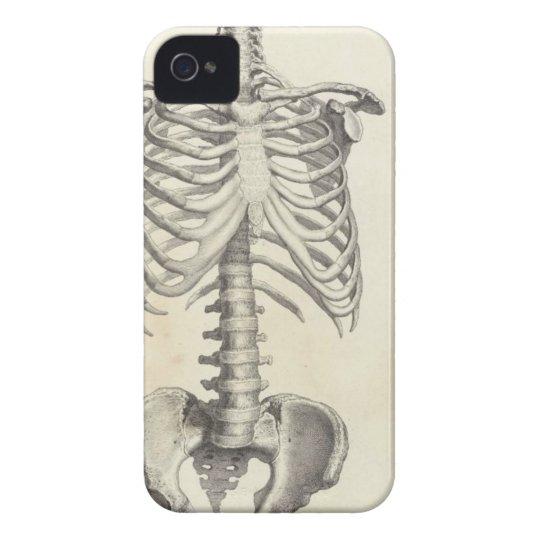 Skeleton Torso Iphone 4 Case Zazzle