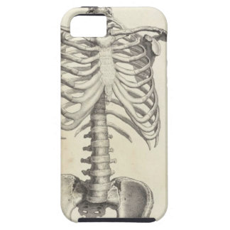 Skeleton Torso iPhone 5 Covers