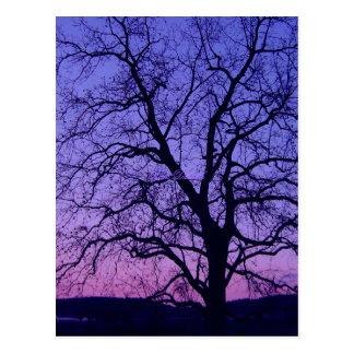 Skeleton Tree Postcard
