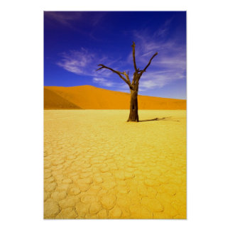 Skeleton trees in Dead Vlei Sossusvlei, Poster
