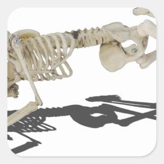 SkeletonProneSideways032215 Square Sticker