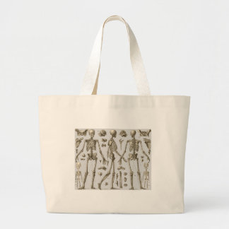 Skeletons from the Brockhaus & Efron Encyclopedia Bags