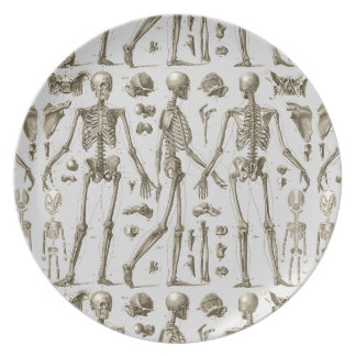 Skeletons from the Brockhaus & Efron Encyclopedia Plate