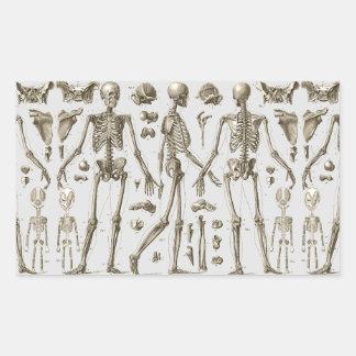 Skeletons from the Brockhaus & Efron Encyclopedia Rectangular Sticker