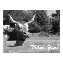 Skeptical Cow Thank You Postcard