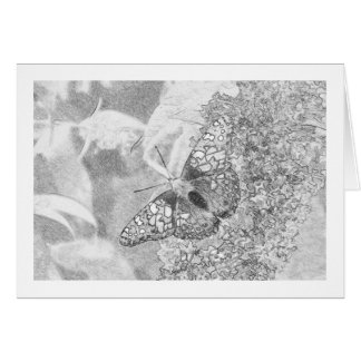 Sketch Effect Painted Lady Butterfly Card