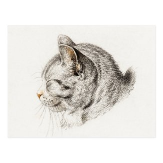 Sketch of a cat with a pinkish nose postcard