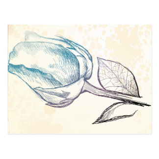 Sketch of a rose, postcard