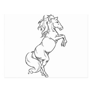 Sketch of Prancing Stallion or Horse Postcard