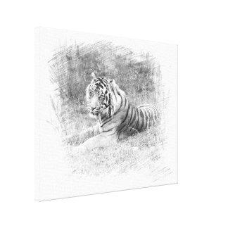 Sketched Sumatra Tiger Canvas Print