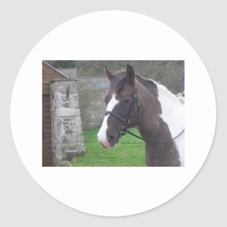 Skewbald Pony Classic Round Sticker