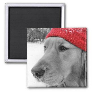 Ski Dog, Black White and Red 2 Inch Square Magnet