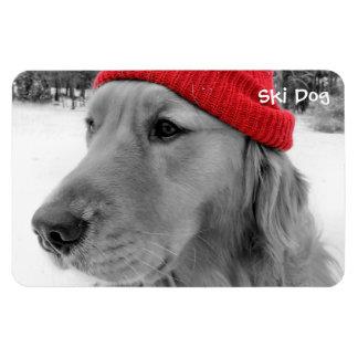 Ski Dog Golden Retriever Magnet