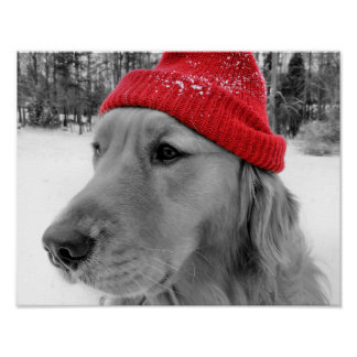 Ski Dog Poster