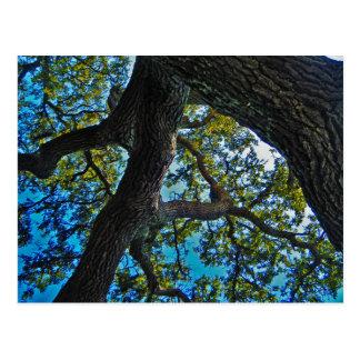 Skies The Limit Tree Postcard