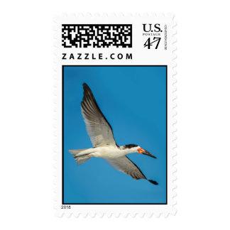 Skimmer Bird in Flight Postage