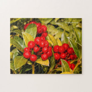 Skimmia Japonica Berries and Leaves Jigsaw Puzzle