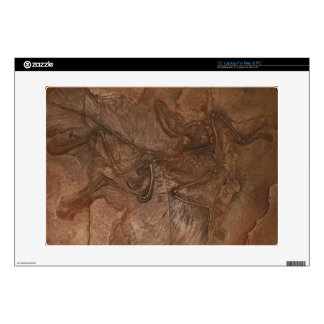 "Skin - Archaeopteryx fossil Skins For 15"" Laptops"