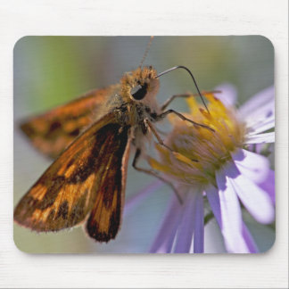 Skipper Butterfly on Aster Photo Mousepads