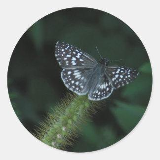 Skipper Butterfly sticker