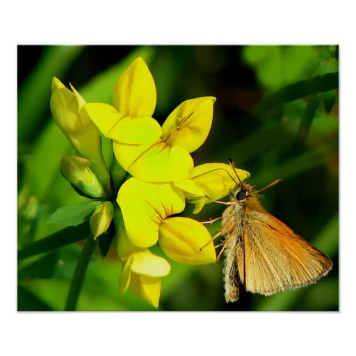 Skipper on Wildflowers Poster