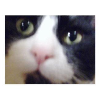 Skitz Kitty Postcards