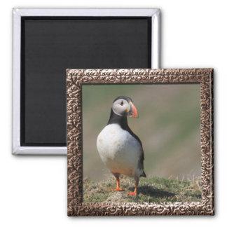 Skomer Island Puffins 2 Inch Square Magnet