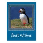 Skomer Island Puffins Post Cards