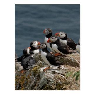 Skomer Island Puffins Postcard
