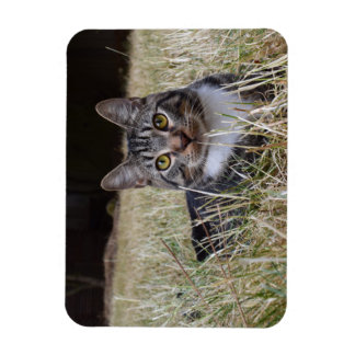 Skooter Magnet Wild Cat